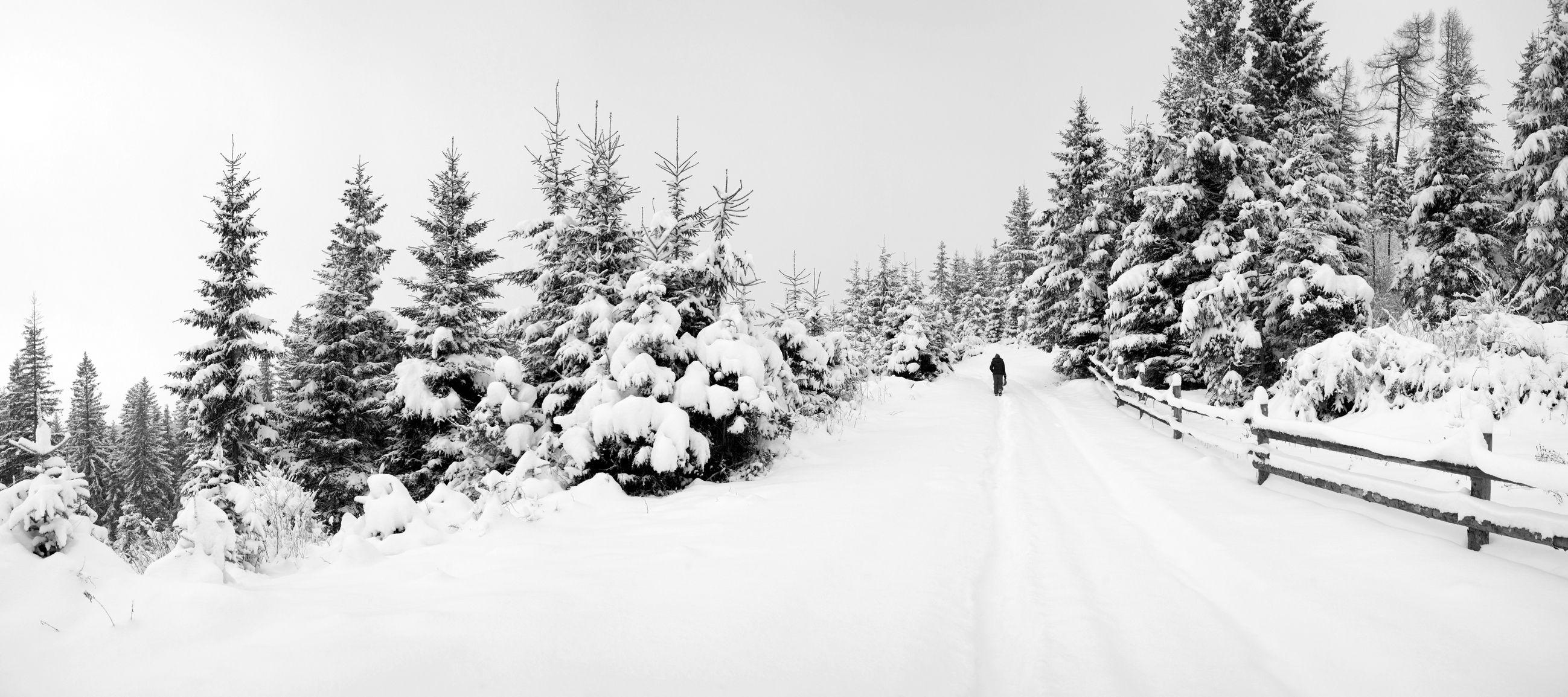 WINTER ROAD IN FOREST © Velkol | Dreamstime.com