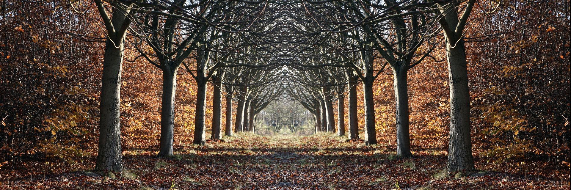 DANISH LANDSCAPE © Jean Schweitzer | Dreamstime.com