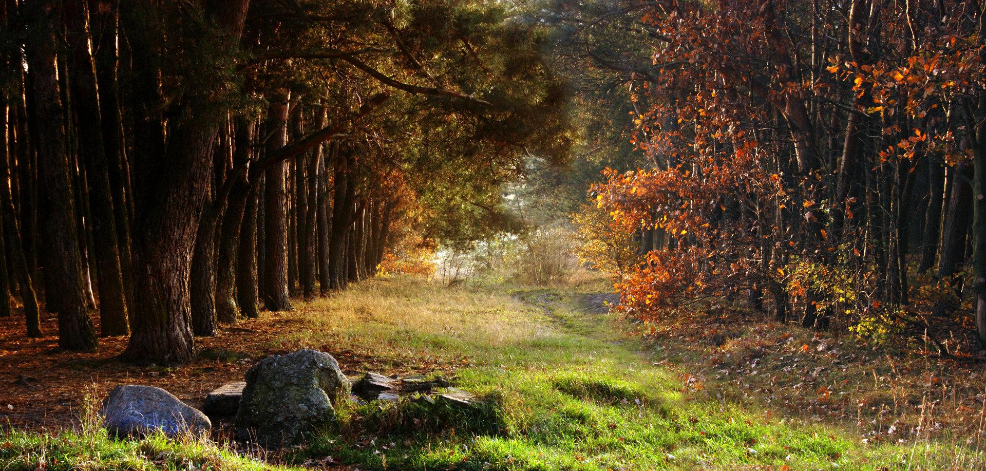 BEAUTIFUL AUTUMN FOREST© Jaroslaw Grudzinski | Dreamstime.com