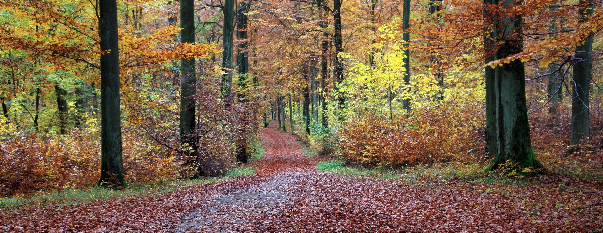 FOREST IN DENMARK © Jean Schweitzer | Dreamstime.com