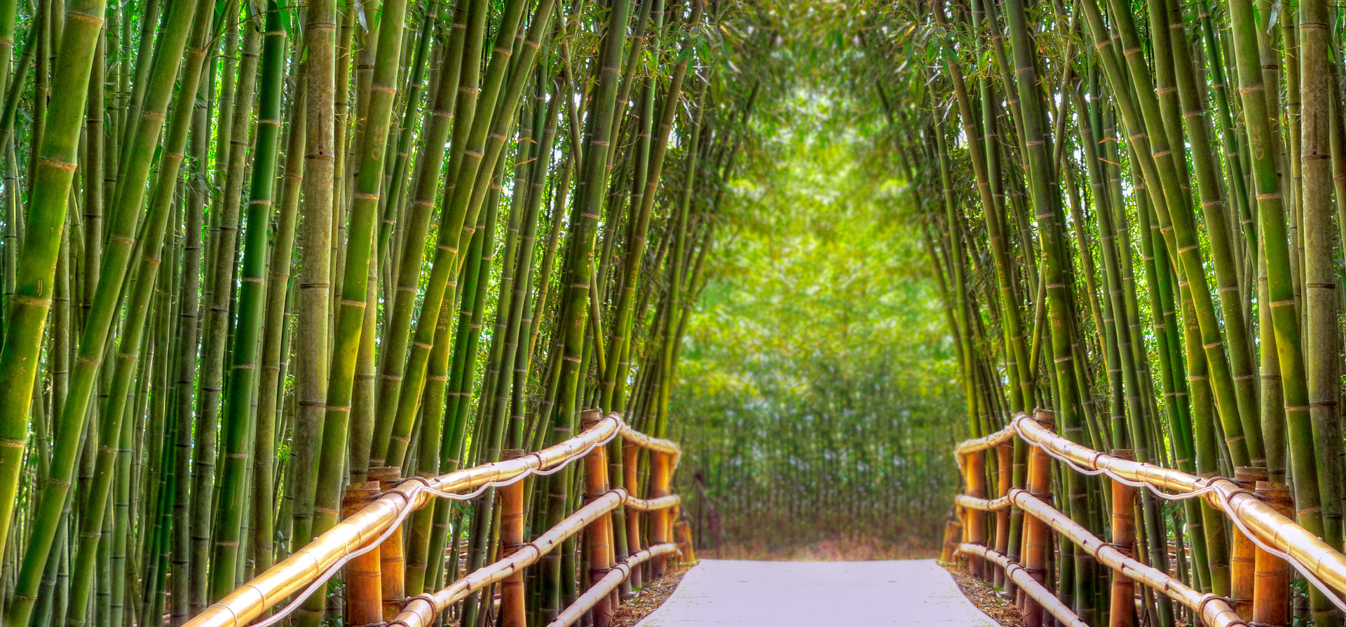 BAMBOO ALLEY © Andreasfischer | Dreamstime.com