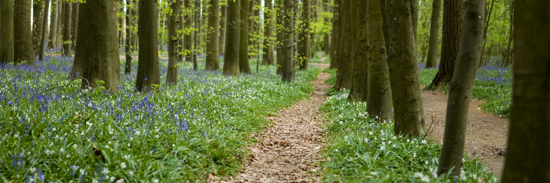 PATH THROUGH THE FOREST © Isselee   Dreamstime.com